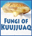 Kuujjuak Fungi